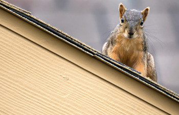 Squirrel-proof your home with James Hardie Siding