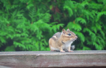 Squirrel Proof Your Home With James Hardie